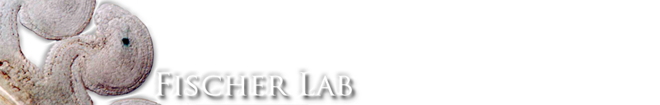 Robert Fischer Lab