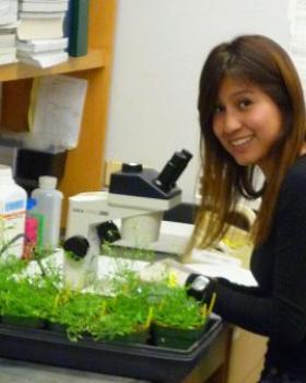 Denisse Rojas working with Arabidopsis in Fischer Lab